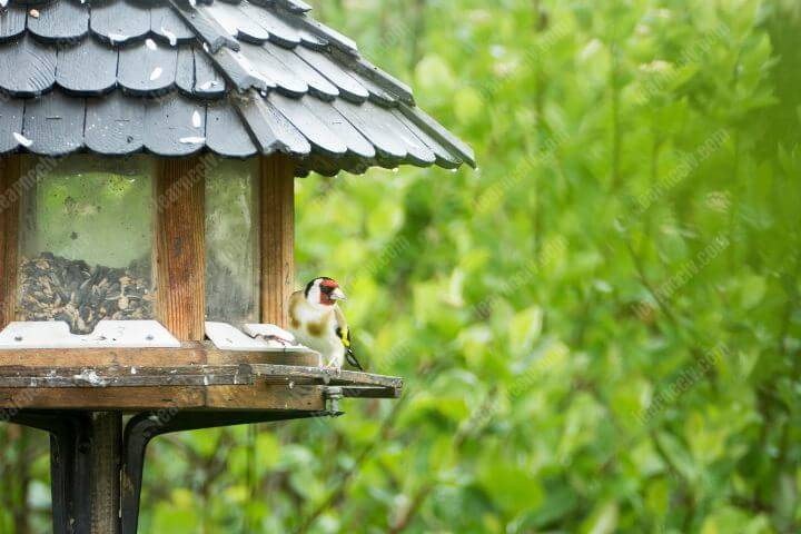 Bird watching with security cameras on feeder