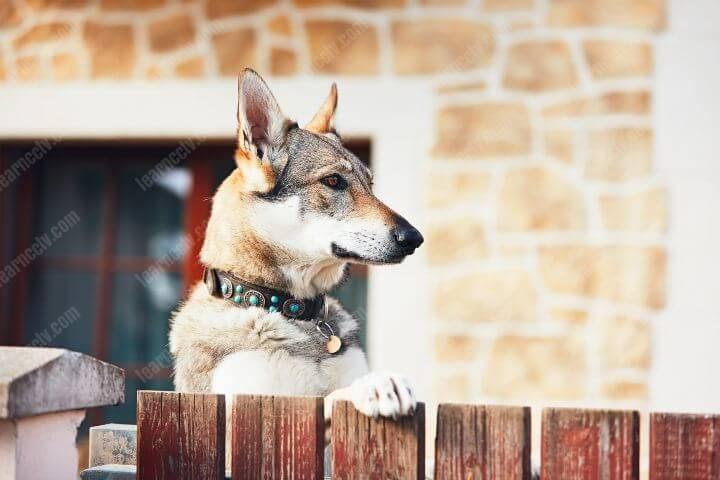 Dog behing fence