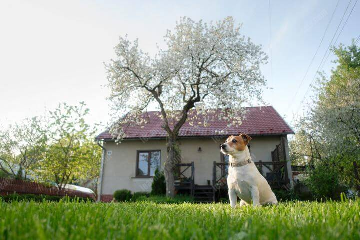 How to keep the neighbor's dog out of your yard