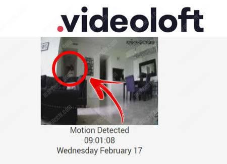 Videoloft Email Alert