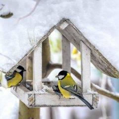 Bird watching with security cameras