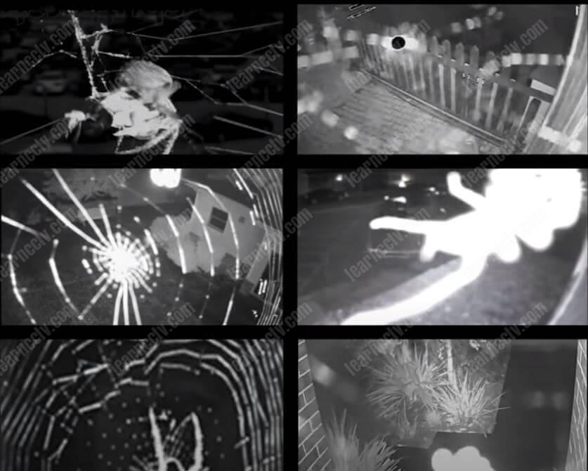 Spider trên camera an ninh